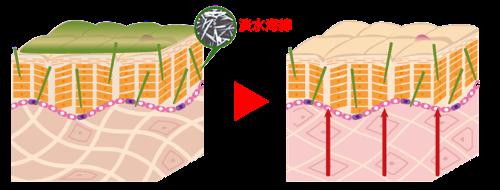 ハーバルシーの作用1